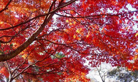 京都秋季賞楓團